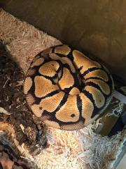 0.1 Python
