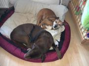 2 Liebevolle Familienhunde *