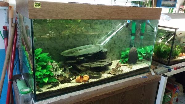 200l aquarium ma e 100x50x40 cm bxhxt in oberderdingen fische aquaristik kaufen und. Black Bedroom Furniture Sets. Home Design Ideas