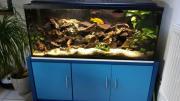 300l. Aquarium - Malawisee