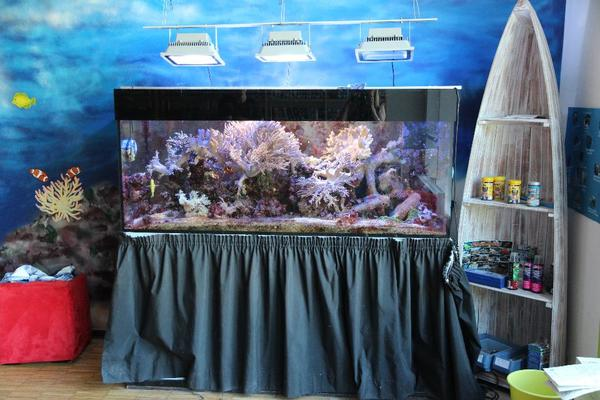 600 l meerwasseraquarium g nstig abzugeben in ebersberg. Black Bedroom Furniture Sets. Home Design Ideas