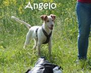 Angelo, ca. 1,5 Jahr alt, 52 cm, 19 kg sucht liebevolles Zuhause! Jung, männlich, Farbe: weiß, EU-Heimtierausweis, aus Tierheim, in Not, entwurmt, gechipt, geimpft, kastriert, Familienhund, kinderfreundlich. Angelo ... 350,- D-55288Armsheim Schimsheim Heu - Angelo, ca. 1,5 Jahr alt, 52 cm, 19 kg sucht liebevolles Zuhause! Jung, männlich, Farbe: weiß, EU-Heimtierausweis, aus Tierheim, in Not, entwurmt, gechipt, geimpft, kastriert, Familienhund, kinderfreundlich. Angelo