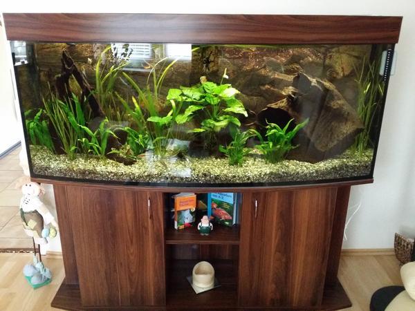 aquarium 460 liter komplett in burg fische aquaristik. Black Bedroom Furniture Sets. Home Design Ideas