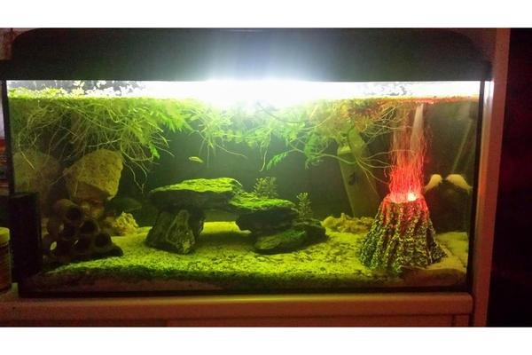 aquarium 60l komplett h2oshow deko sand fische in. Black Bedroom Furniture Sets. Home Design Ideas