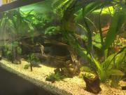 Aquarium 750 lt