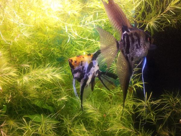 aquarium fische zubeh r in karlsruhe baden kaufen bei deine. Black Bedroom Furniture Sets. Home Design Ideas