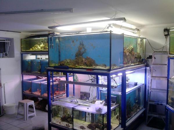 aquarium gebraucht in vestenbergsgreuth fische. Black Bedroom Furniture Sets. Home Design Ideas