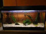 Aquarium Größe: 80cmx40cmx35