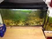 Aquarium mit Besatzung