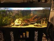 Aquarium mit Fischen,