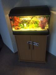 Aquarium mit Schrank