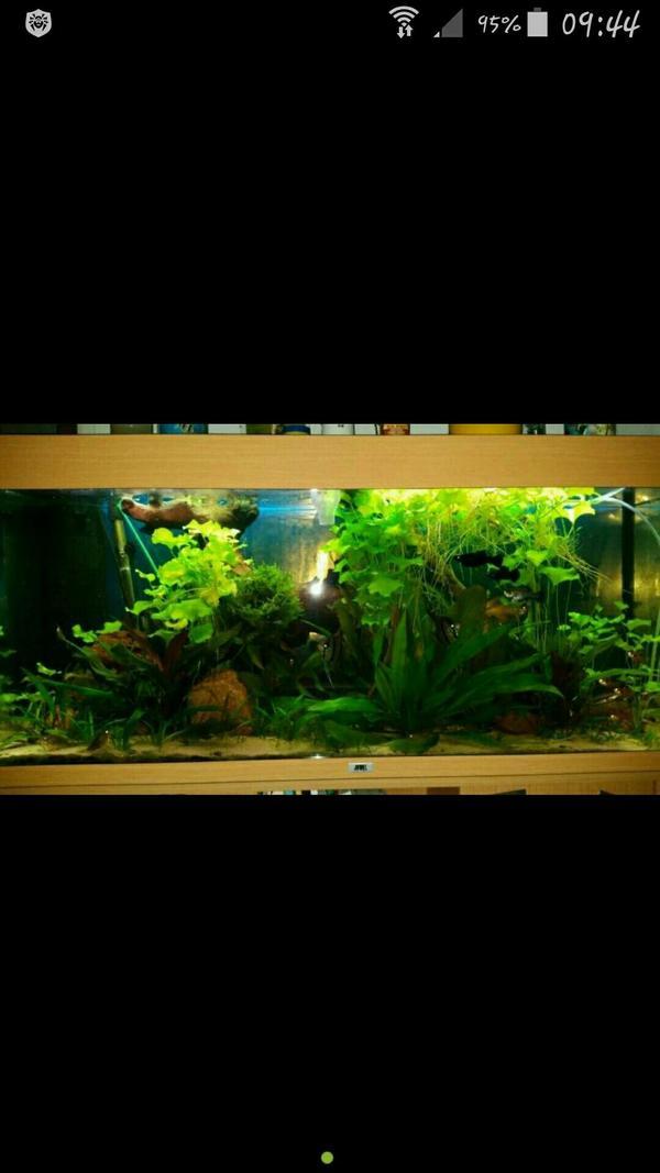 Aquarium mit unterschrank in pasewalk fische aquaristik for Aquarium mit unterschrank