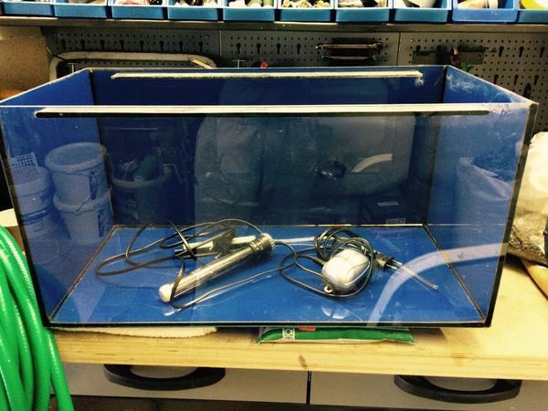Aquarium mit zubeh r gebraucht in ortenberg fische for Aquarium gebraucht