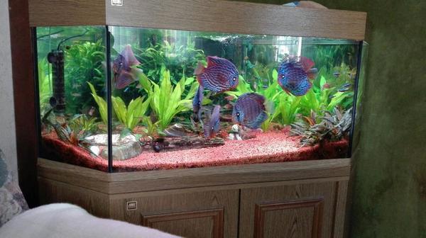 aquarium mit zubeh r in stuttgart fische aquaristik kaufen und verkaufen ber private. Black Bedroom Furniture Sets. Home Design Ideas