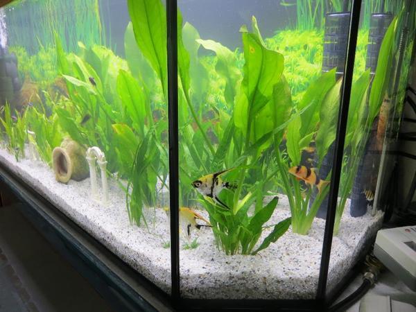 co2 anlage aquarium kaufen gebraucht und g nstig. Black Bedroom Furniture Sets. Home Design Ideas