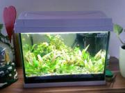 Aquarium Tetra Aquaart