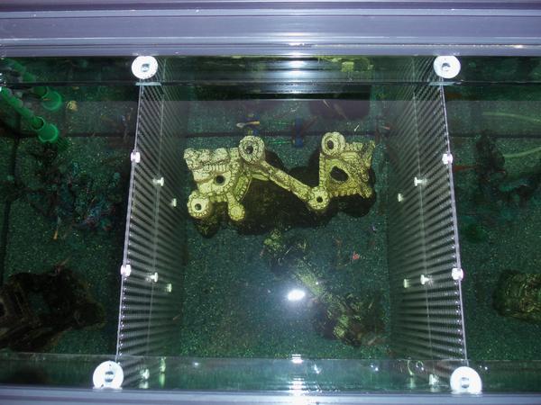 aquarium universal trennwand f r aquarien fische kampffische jungfische aquarium zubeh r. Black Bedroom Furniture Sets. Home Design Ideas