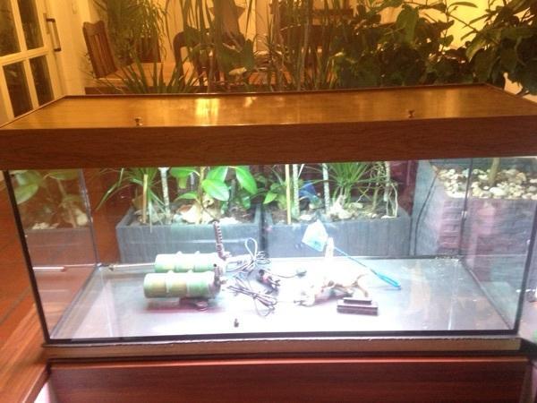 Aquarium zu verkaufen 120x40x50 in augsburg fische for Aquarium 120x40x50