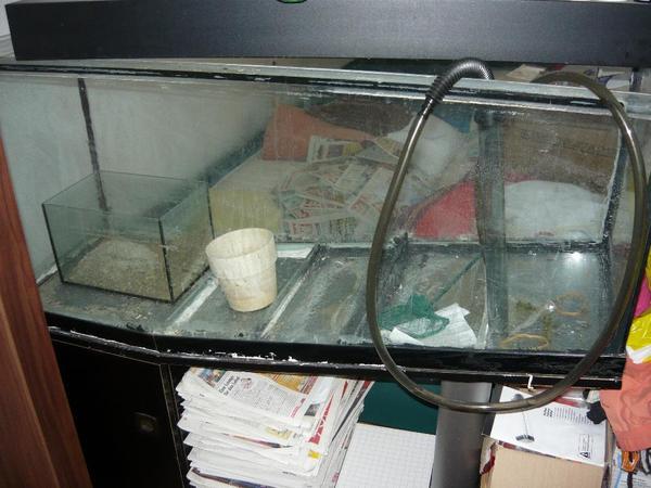 Aquarium 50cm neu und gebraucht kaufen bei for Aquarium gebraucht