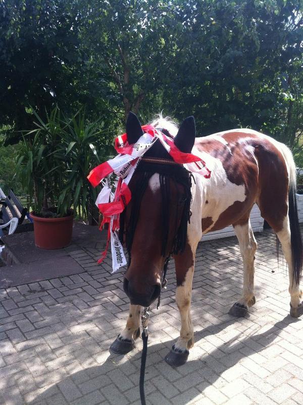 biete reitbeteiligung als eigenes pferd in bruchertseifen reitbeteiligungen kaufen und. Black Bedroom Furniture Sets. Home Design Ideas