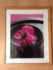 Blumenbilder mit Rahmen