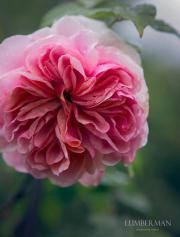 Blumenliebhaber sucht: Bauplatz