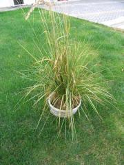 Buschgrass für den