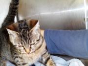 Dringend: liebe Katze