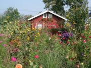 Gartenparzelle, Gartenhaus in
