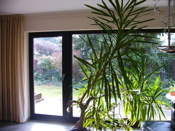 xoyox | wohnzimmer pflanzen große, Hause deko