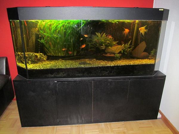 gro es bioplast aquarium 160 cm lang zu verkaufen in seeheim jugenheim fische aquaristik. Black Bedroom Furniture Sets. Home Design Ideas