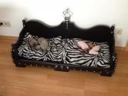 hundebett holz tiermarkt tiere kaufen. Black Bedroom Furniture Sets. Home Design Ideas