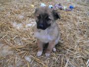 Hundebub Marley