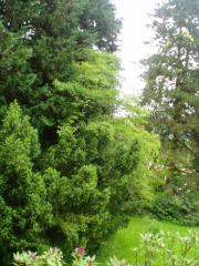 idyllische Gartensinglewohnung in