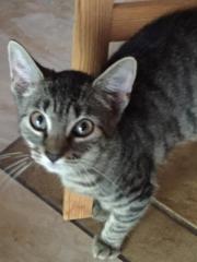 Junge Katzendame