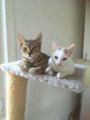 Katzen ( 3 Kitten
