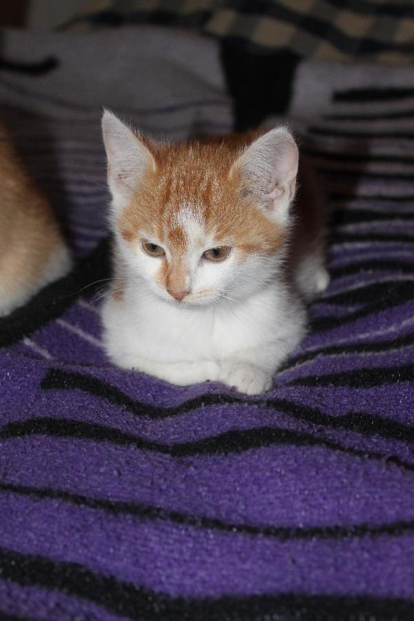 Kater Zu Verschenken Katzen Pictures to pin on Pinterest