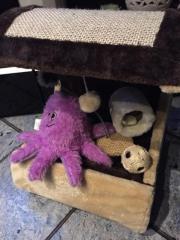 Katzenhöhle + 4 Spielzeuge