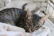 Katzenkinder (gechipt,geimpft,