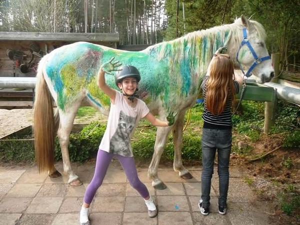 kindergeburtstag mit pferden in der natur n he n rnberg feiern in roth reitbeteiligungen. Black Bedroom Furniture Sets. Home Design Ideas