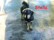 Kleine Stella, 14