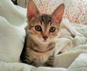 Kleines Katzenherz zu