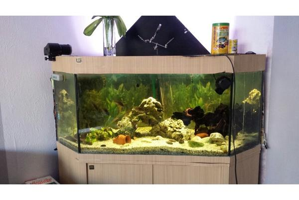 aquarium fische zubeh r in potsdam kaufen bei deine. Black Bedroom Furniture Sets. Home Design Ideas