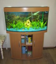 Komplett eingerichtetes Aquarium