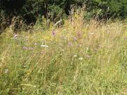 Kräuterwiesen-Heu aus