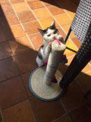 Liebevolle Kätzchen sucht