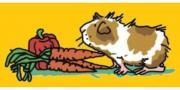 Meerschweinchenhilfe e.V.
