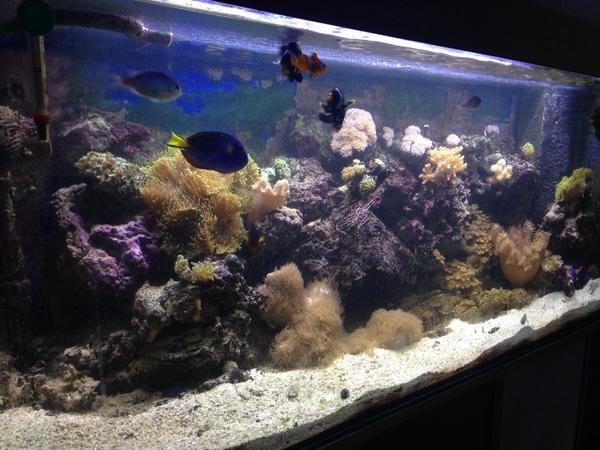 Fische Aquarium Hamburg : meerwasser aquarium komplett 240l 120x50x40cm in hamburg ~ Lizthompson.info Haus und Dekorationen