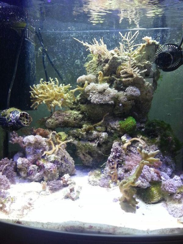 beleuchtung led kleinanzeigen aquarium fische zubeh r deine. Black Bedroom Furniture Sets. Home Design Ideas