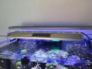 Meerwasser LED ECO